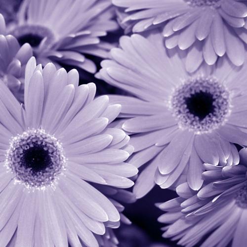 Bunch of Flowers I by Tony Koukos