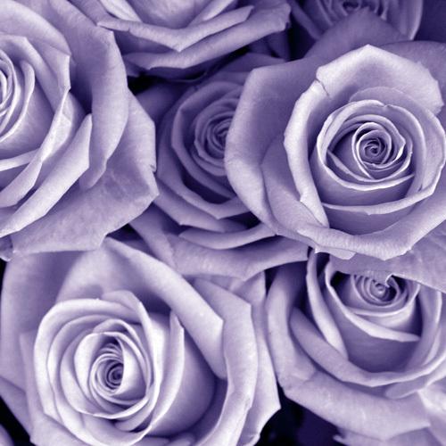 Bunch of Flowers III by Tony Koukos