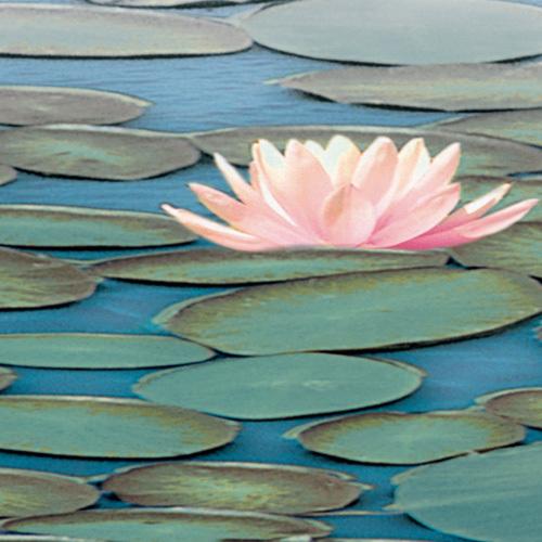 Lily Pool II by Adam Brock