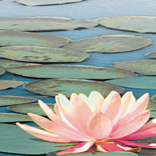 Lily Pool IV by Adam Brock
