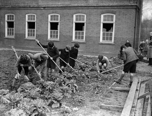 Children growing vegetables, 1930 by Mirrorpix