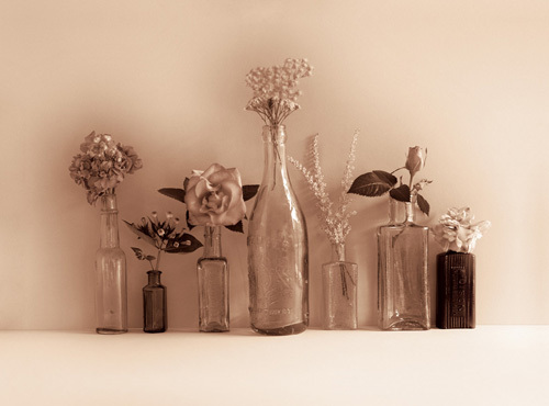 Flower Collection by Ian Winstanley