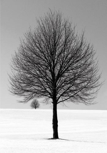 Winter Tree by Ilona Wellmann