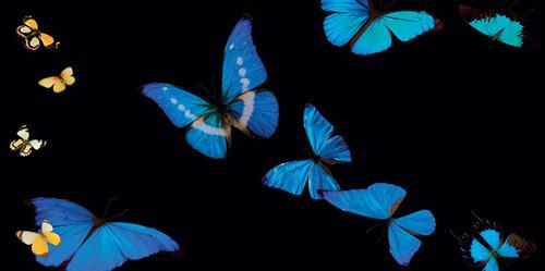 Butterflies in Flight I by Roger Camp