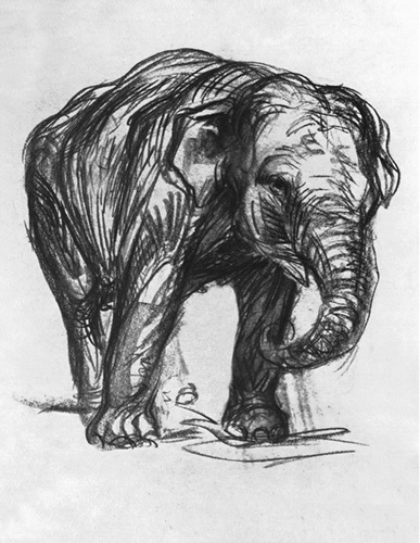 Elefant,1907 by Franz Marc