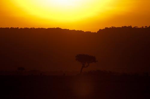 Masai Mara, Kenya by Sergio Pitamitz