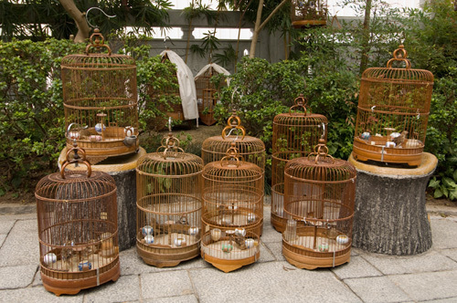 Bird Garden market, Mong Kok District, Kowloon, Hong Kong, China by Sergio Pitamitz
