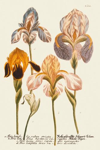 Iris Resplendant I by Joseph Weinmann