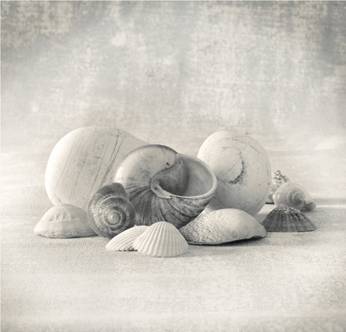 Still Life of Shells II by Ian Winstanley