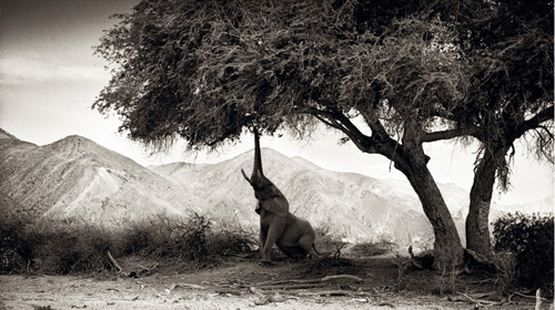 Elephant Hoanib Namibia by Philippe-Alexandre Chevallier