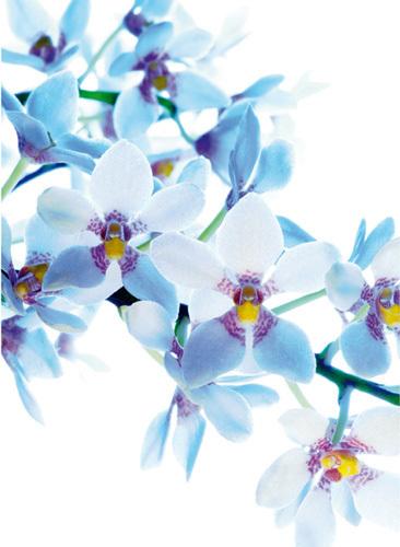 Blue Angel by Warwick Orme
