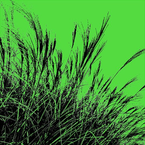 Grass (green), 2011 by Davide Polla