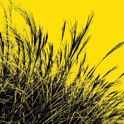 Grass (yellow), 2011 by Davide Polla