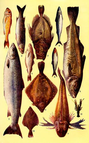 Fish by Mrs Beeton