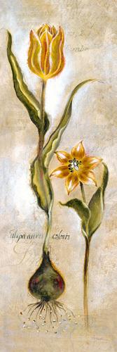 Tulipa Violoncello VI by Augustine