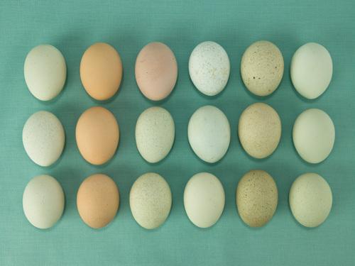Eggs 85A by Assaf Frank