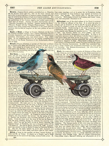 Birds on a Skateboard by Marion McConaghie