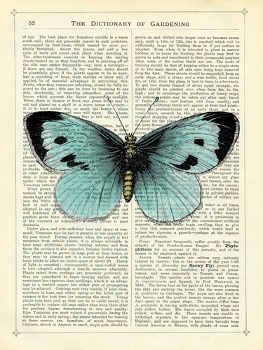 Blue Butterfly by Marion McConaghie