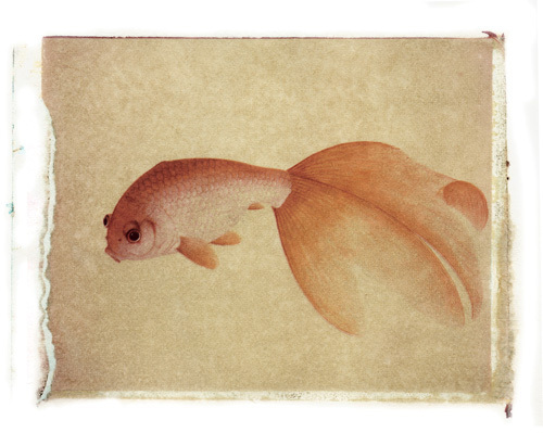 Fish 3 by Deborah Schenck