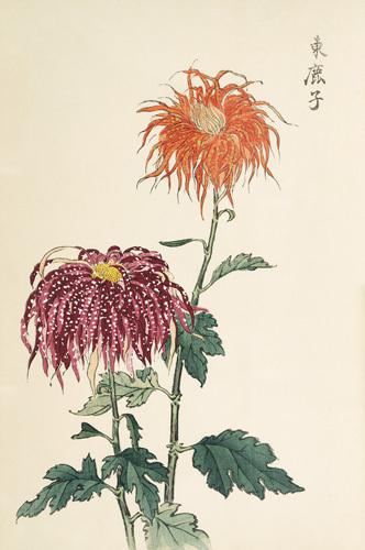 Chrysanthemum by Keikwa Hasegawa