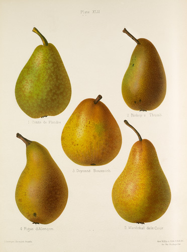 Volume II, Plate 42 by G. Severeyns