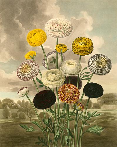 Plate III by Samuel Curtis