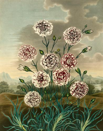 Plate VI by Samuel Curtis