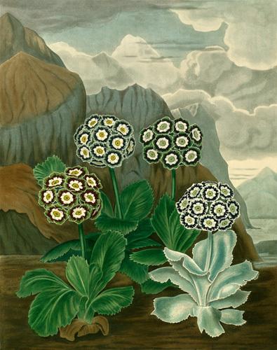 Plate VII by Samuel Curtis