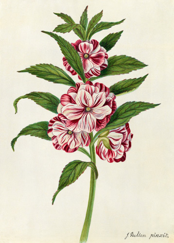 A Balsam by James Bolton