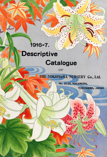 1916-7 by The Yokohama Nursery Co Ltd