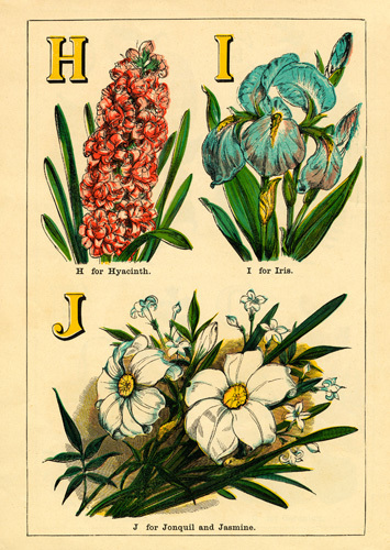 H for Hyacinth, I for Iris, J for Jonquil and Jasmine by John Dicks