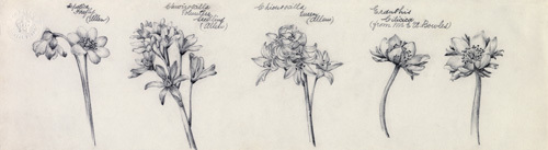 Hepatica, Chionoscilla and Eranthis by Alice Bickham