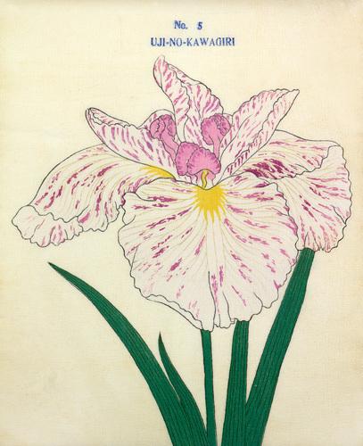 No. 5 Uji-No-Kawagiri by The Yokohama Nursery Co Ltd