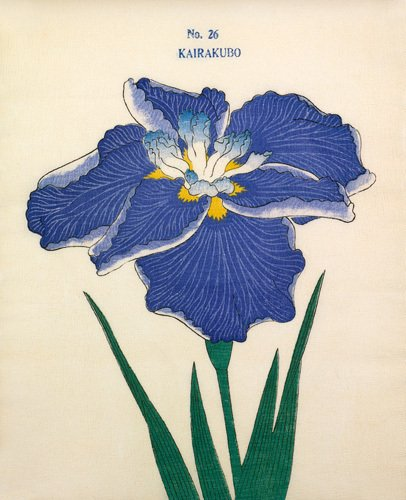 Plate 26 by The Yokohama Nursery Co Ltd