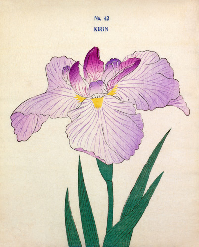 Plate 43 by The Yokohama Nursery Co Ltd