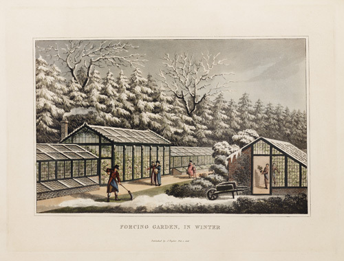 Forcing Garden, in Winter by Humphry Repton