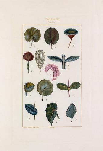 Tableau VIII. Feuilles by Pierre Jean Francois Turpin