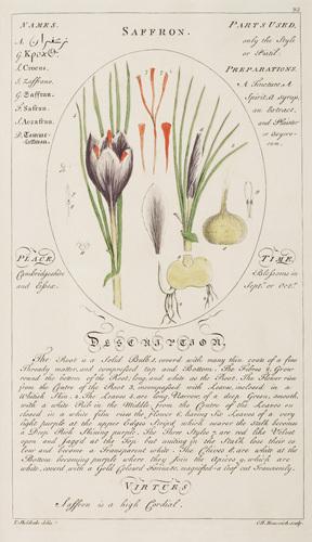 Saffron by Cornelius Heinrich Hemmerich