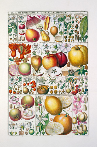 Plate 33 by Johannes Gessner
