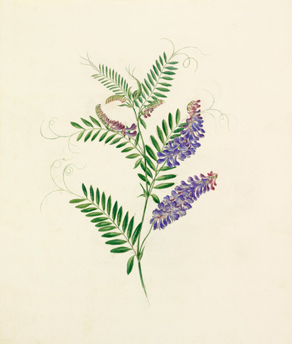 Plate 34 by Lydia Penrose
