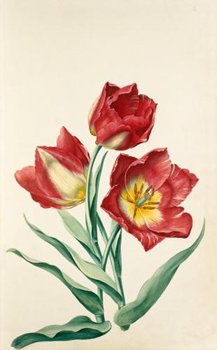 Plate 2 by August Wilhelm Sievert