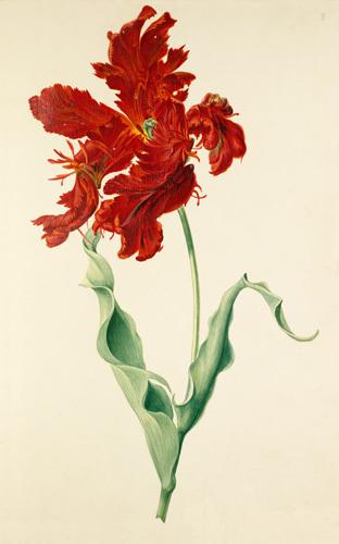 Plate 8 by August Wilhelm Sievert