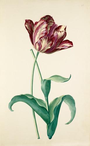 Plate 20 by August Wilhelm Sievert