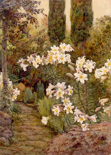 Consider the Lilies by Edith Helena Adie