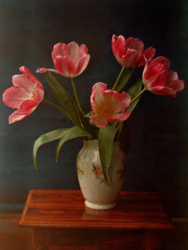 Five Pink Tulips in a Vase by William van Sommer