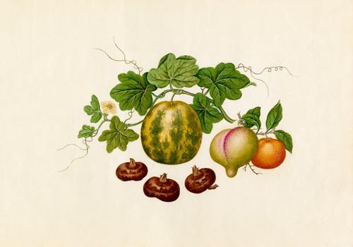 Citrus reticulata, Prunis persica, Citrullus lanatus, Eleocharis tuberosa by Wang Lui Chi