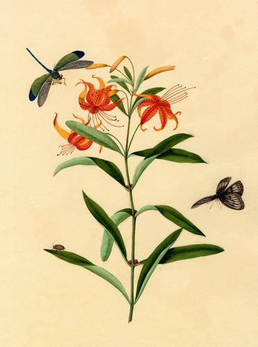 Lilium tigrinum by Anonymous