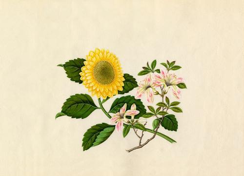 Weigela floribunda, Chrysanthemum indicum by Wang Lui Chi