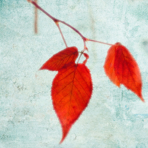 The Last Leaves by Robert Cadloff