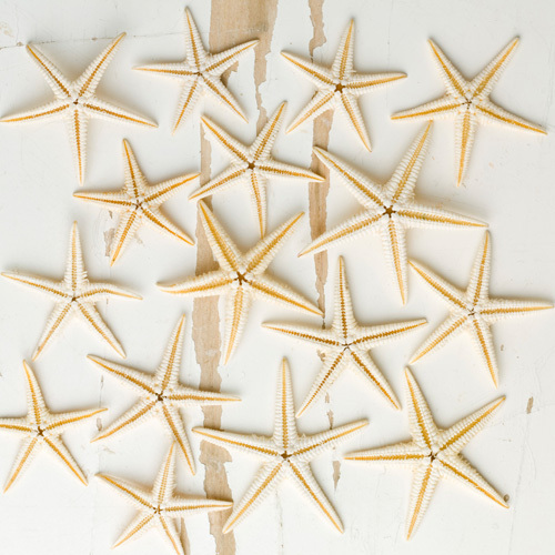 Wild Starfish by Deborah Schenck